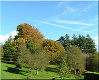 SK2957 : Willersley Castle grounds by J147