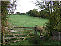 SJ9052 : Grazing Land, near Stockton Brook, Staffordshire by Roger  Kidd