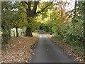 SJ4430 : Lane through Garden Plantation by John Haynes