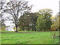 SJ4430 : Trees on ancient parkland by John Haynes