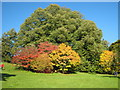 SP1833 : Autumn colours at Batsford by David Stowell