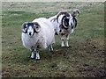NB5262 : Two fine boys, North Lewis by sylvia duckworth