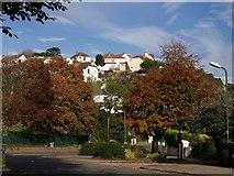SX9065 : Autumn colour in Torre by Derek Harper