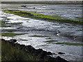 TM2024 : Colour contrasts at Landermere Creek by Zorba the Geek