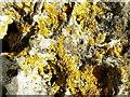 SP2930 : Lichen growth, Rollright Stones, Oxfordshire by Brian Robert Marshall