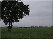 SU4773 : Farmland south of Church Farm by Graham Horn