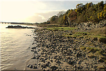 SD3279 : Low cliffs on the river Leven by Roger Temple