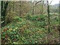 SO4086 : Overgrown trackbed by John Poyser