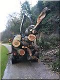 SE2768 : Tree Removal by Matthew Hatton