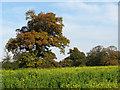 TG2826 : Green fertilizer by Evelyn Simak