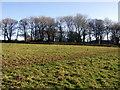 SM9725 : Hayog Farm by ceridwen
