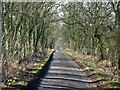 NY9980 : The minor road to Great Bavington by Mike Quinn