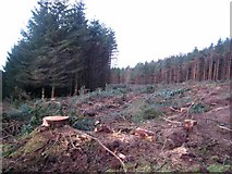NX9263 : Forest clearing at Thorter Fell by Oliver Dixon