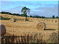 NY9980 : Harvest Time by glyn swain