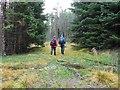 NN8162 : Waymarked forest path by Rob Burke