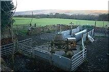 NZ1858 : Sheep Pens, Cut Thorn Farm by Mick Garratt
