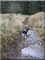 NY5473 : Dog Beck !! by Mark Taylor