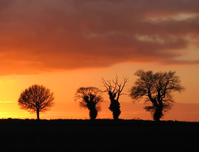 TG2624 : Silhouettes of trees by Evelyn Simak