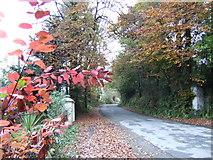 T0430 : Autumnal scene - Garryvarren, Co. Wexford by Jonathan Billinger