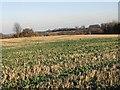 TR2648 : Looking E towards Haynes Farm by Nick Smith