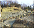 SO9391 : Limestone Exposure, Dudley, Worcestershire by Roger  Kidd
