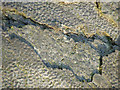 SO9391 : Limestone Ripples (detail), Dudley, Worcestershire by Roger  Kidd