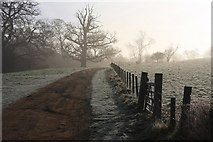 TL8162 : Track to Ickworth House by Bob Jones