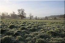 TL8162 : Frosty fields in Ickworth Park by Bob Jones