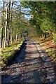 SD8967 : Track Around Malham Tarn by Steve Partridge