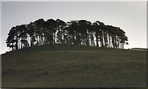 SE7296 : Hill Plantation by Colin Grice
