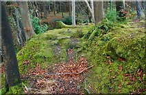 J3532 : Tree roots, Tollymore forest by Albert Bridge