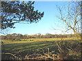 SH3335 : Grazing land north of Tan-y-bryn by Eric Jones