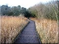 TL4045 : Fowlmere boardwalk by Sandy B