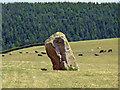 SJ2430 : Standing Stone by John Clift