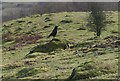 SO7639 : Crow and Ant Hills on Hangmans Hill by Bob Embleton