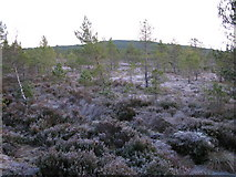 NH9817 : Tore Hill  from Abernethy by jerry sharp