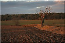 TL8063 : Farmland in Little Saxham by Bob Jones