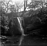 SD9163 : Janet's Foss, near Gordale Bridge by Dr Neil Clifton