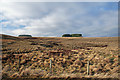 NY8691 : Bught Knowe by Peter McDermott