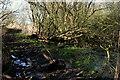 TG4500 : Wet January footpath beside Waveney Forest by Julie Williams