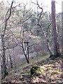 SO2796 : Marrington Dingle by Paul Beaman