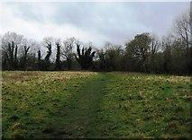 SU7251 : Footpath to Odiham Castle by Sandy B