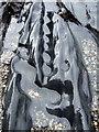 SN0541 : Sea-sculpted rocks (detail) by ceridwen