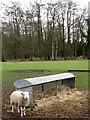 TG0004 : Sheep waiting at hay rack by Evelyn Simak