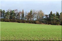 SO5793 : Farmland near Brockton, Shropshire by Roger  Kidd