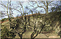 SO5187 : Old Quarry near Munslow, Shropshire by Roger  Kidd