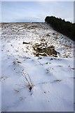 NZ5812 : Path Climbing up to Newton Moor by Mick Garratt