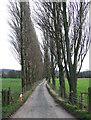 SO5183 : Lane from Lawton Farm, Shropshire by Roger  Kidd