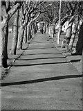 NT2572 : Jawbone Walk, the Meadows by Lisa Jarvis