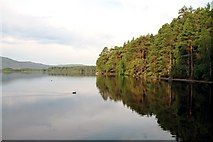 NH9718 : Loch Garten by -